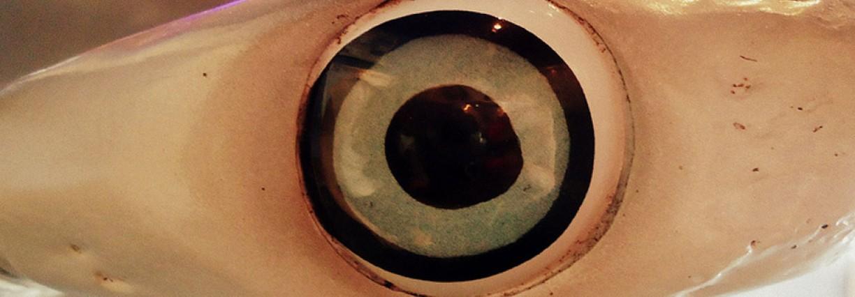 Lensa Fisheye Alias Lensa Mata Ikan yang Artistik